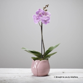Ophelias Orchid